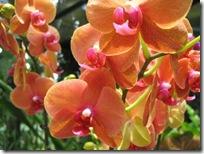 fleurs (450x338)