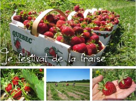 festivalfraise