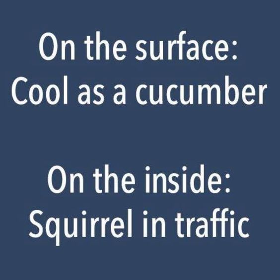 cucumber squirrel